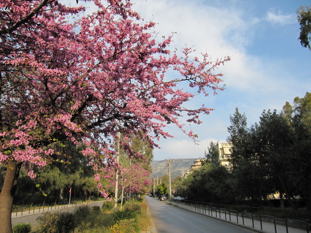 The main road of the University of Athens Campus in Spring