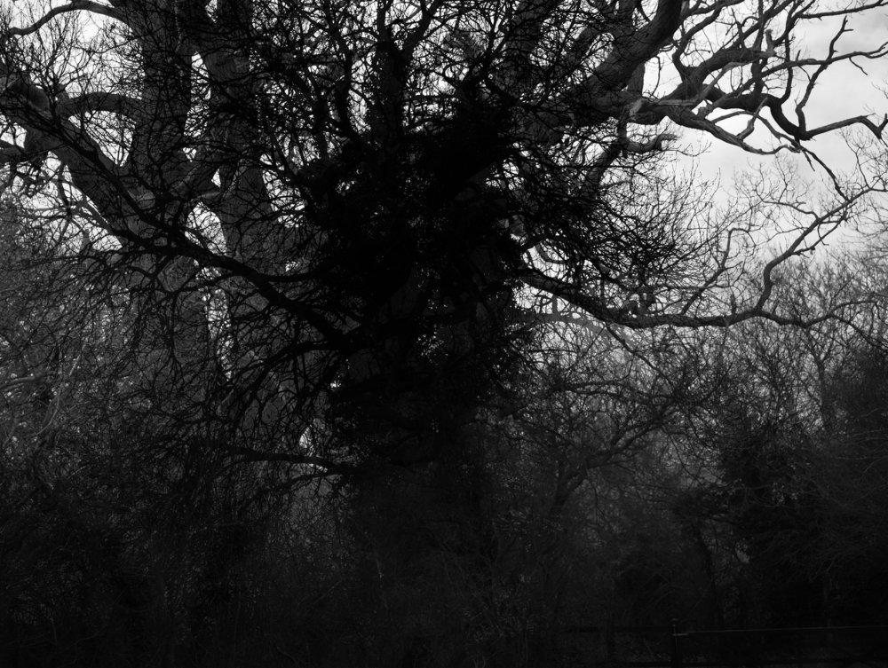 Corpse  (2018) Lloyd Evans