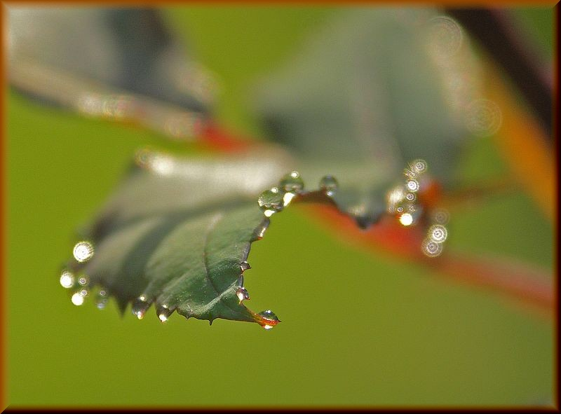Marilylle Soveran,  dew-edged , Flickr (Creative Commons)