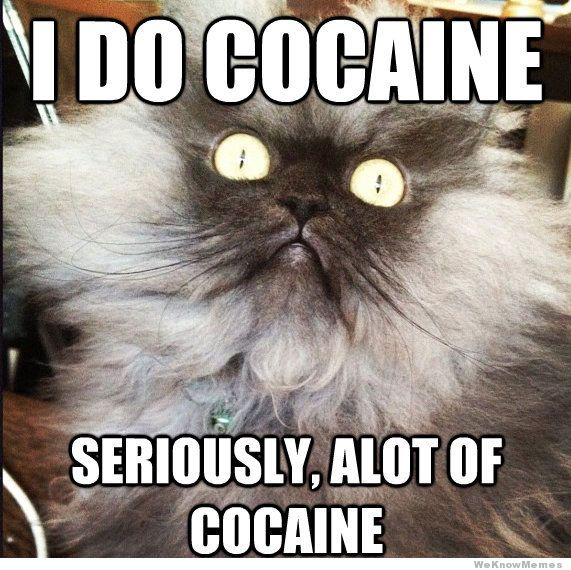 i-do-cocaine-cat.jpg