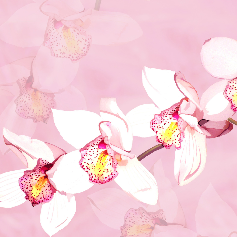 ORCHID ON PINK – Design Ref. 1554