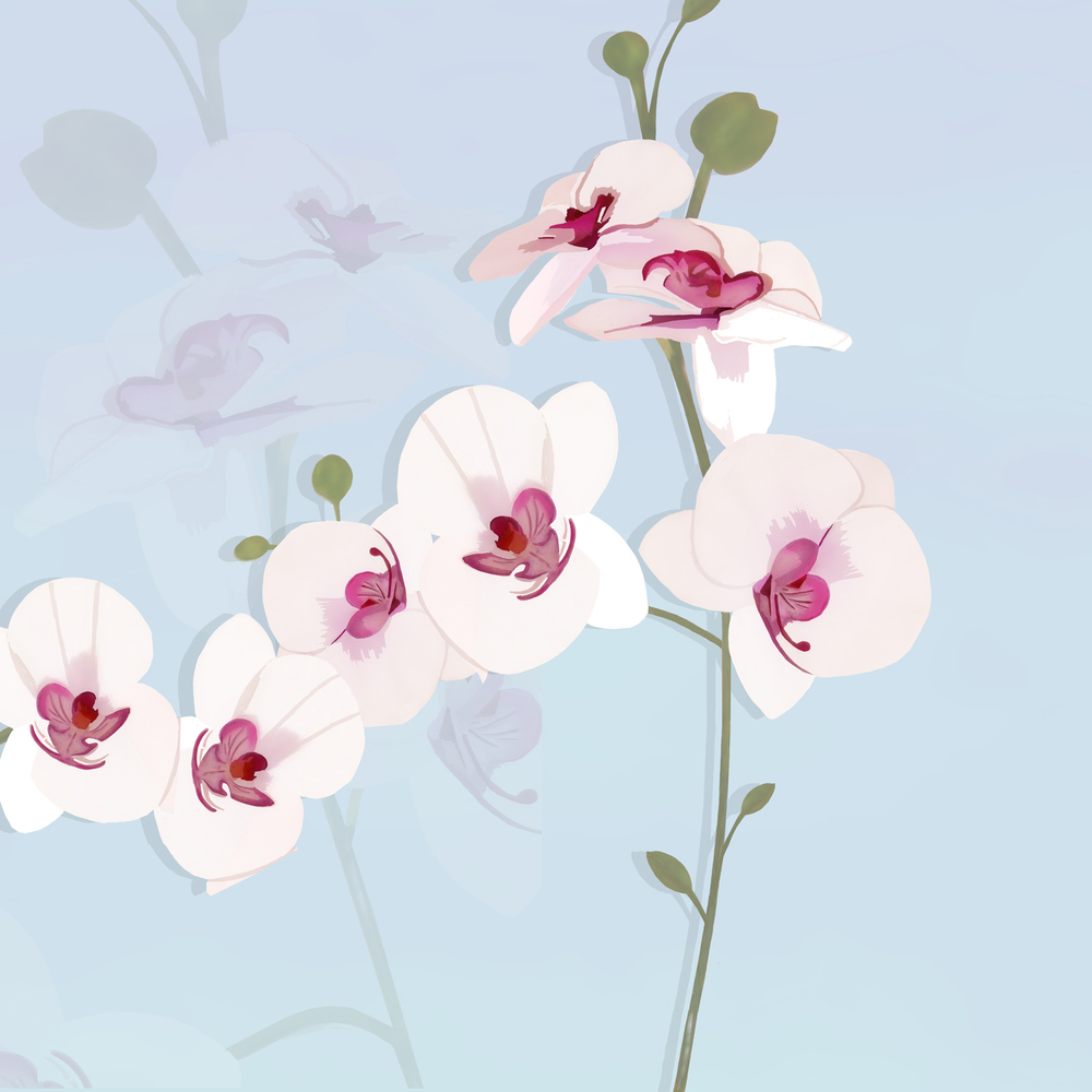 WHITE ORCHID DISPLAY – Design Ref. 1837