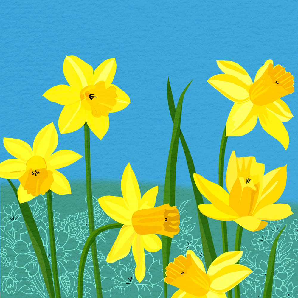 DAFFODIL SPLASH – Design Ref. 2143