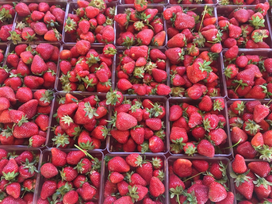 These fresh strawberries are a hot commodity at our market. Get there early because they go fast!