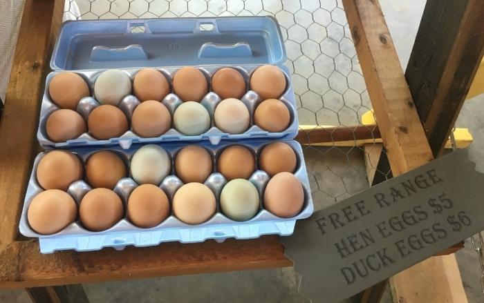 TSFM Eggs.jpg