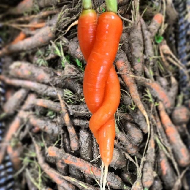 Carrot Twist.jpg
