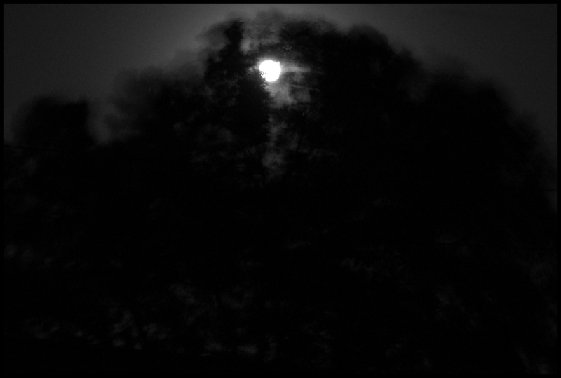 moon-tree-wind-d-fr-mtpmcg911-sm-1413