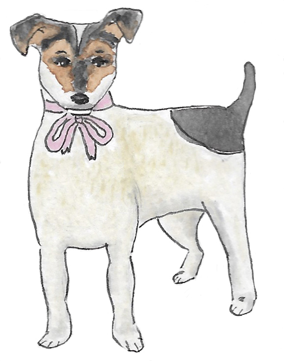 Jack Russell Sketch