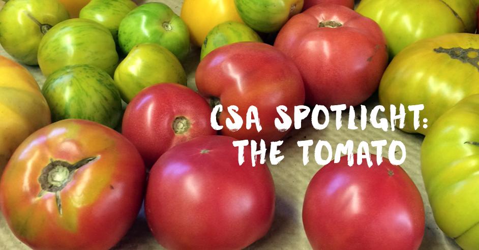 CSA Tomato