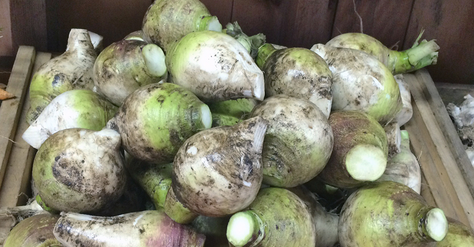 CSA_week-27_macomber_turnips
