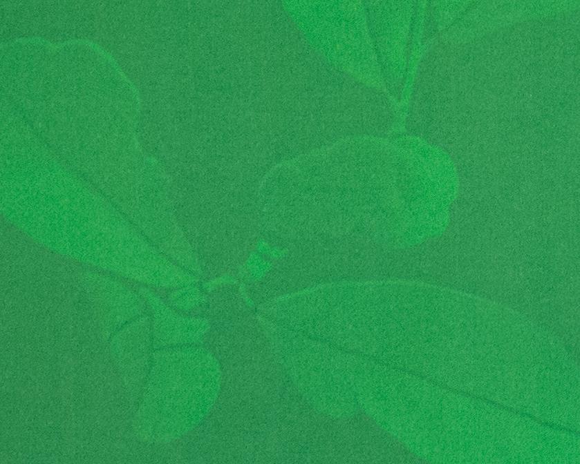 magnolia_zoom.jpg