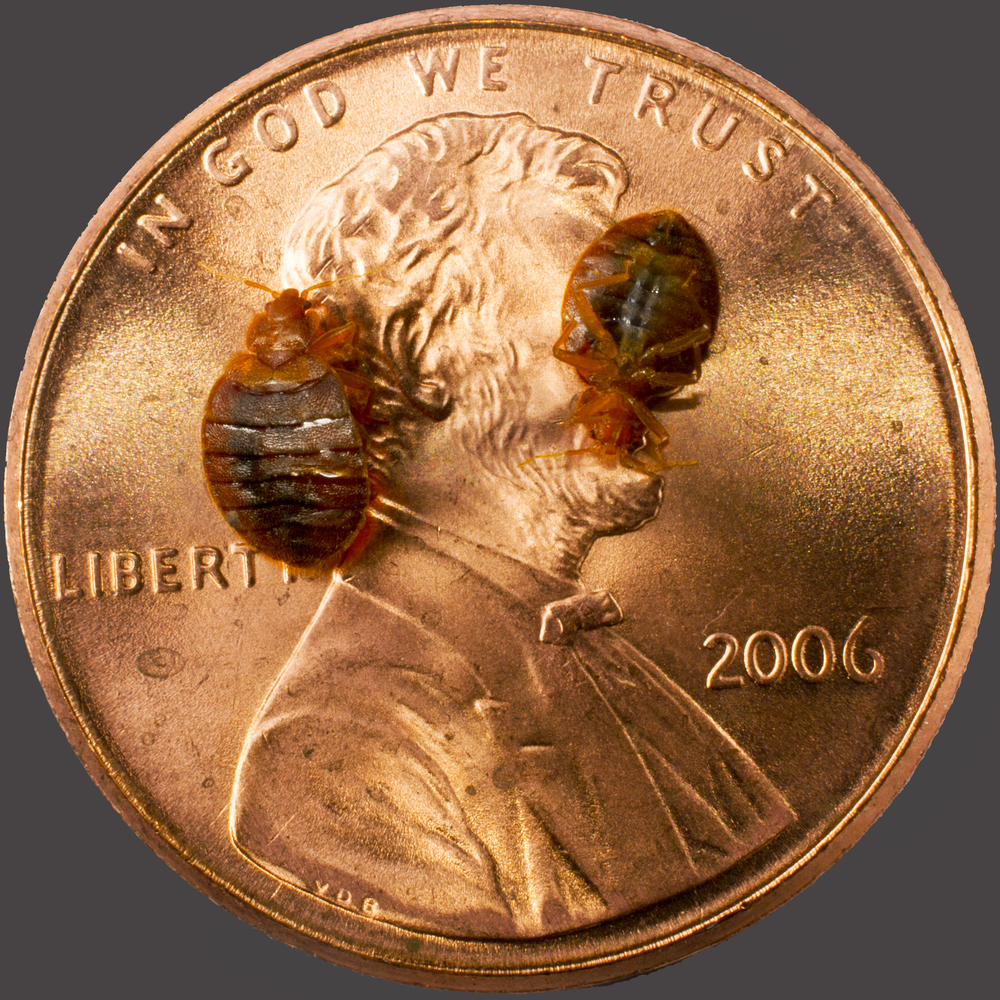 Bed Bugs To Scale.jpg