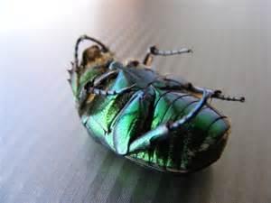 Dead bug 2.jpg