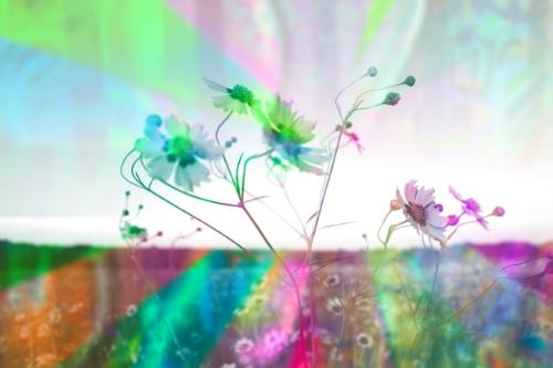 Wildflowers + collage + graffiti