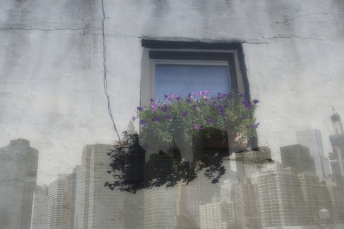 NYC skyline + window flower box