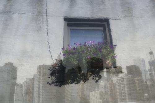NYC skyline + window flower box