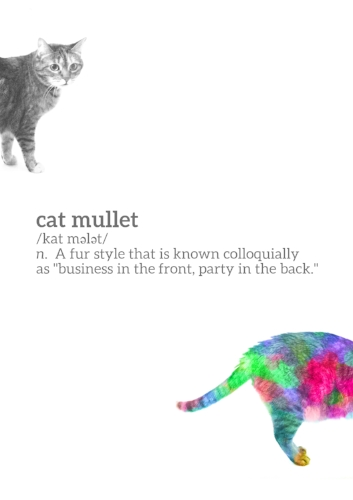 Definition of a cat mullet.
