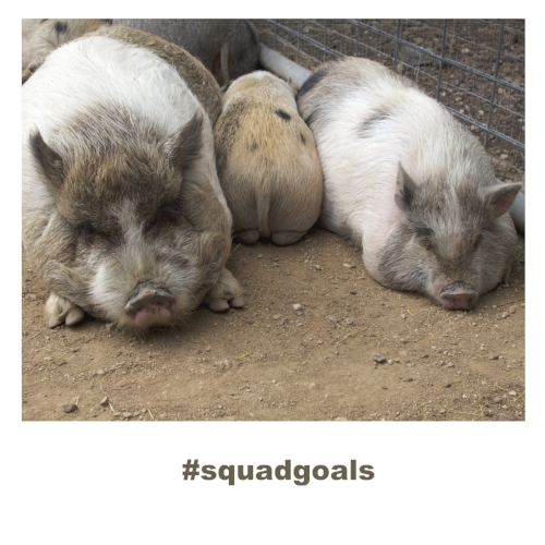 3_pigs_squad_goals_square.jpg