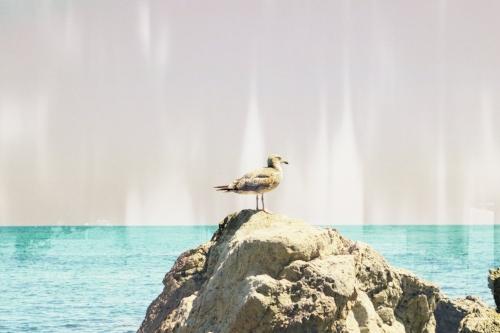 Laguna Beach seagull + white streaks