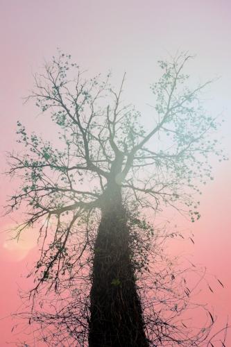 Tree + Blushing sky