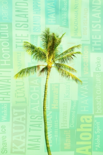 Palm tree + Hawaii Magazine collage