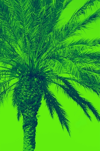 Blue palm tree + Lime sky