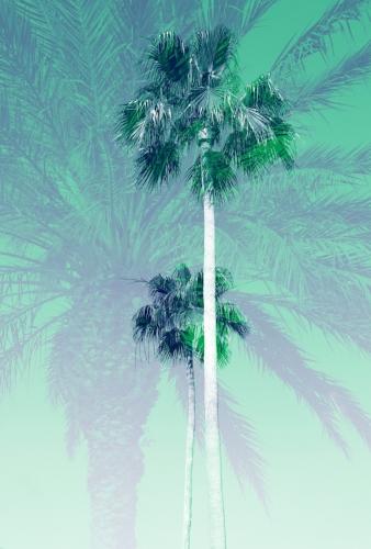 2 palm trees + 1 palm tree