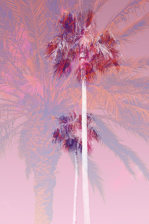 palms_28018691468_75d2aa5d01_o.jpg