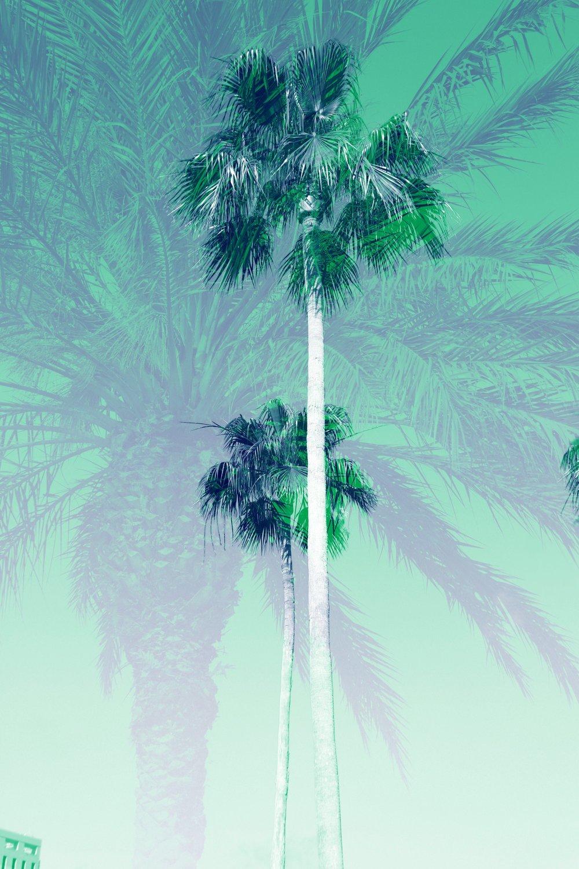 palms_28022218798_da41964d6c_o.jpg