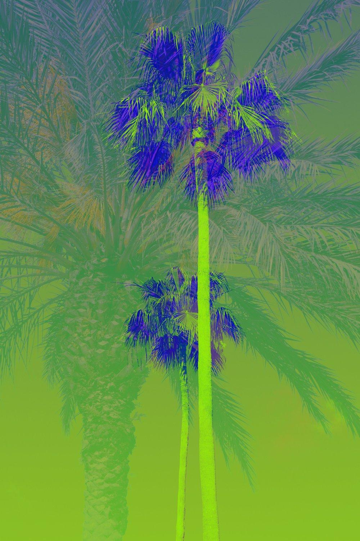 palms_41171163964_34ddd45f6d_o.jpg