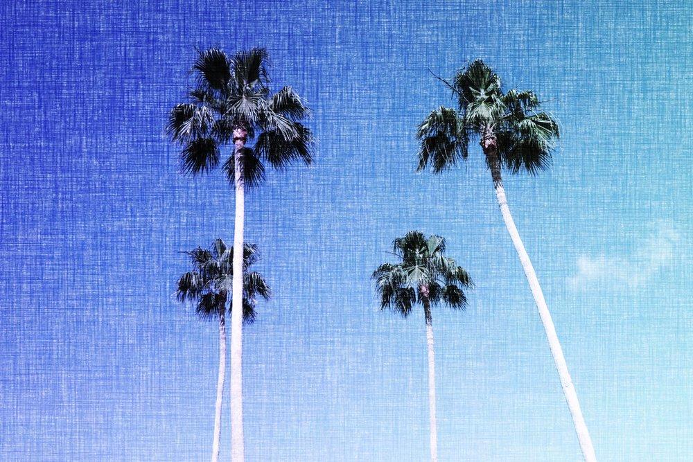 palms_41677304084_ee67936b04_o.jpg