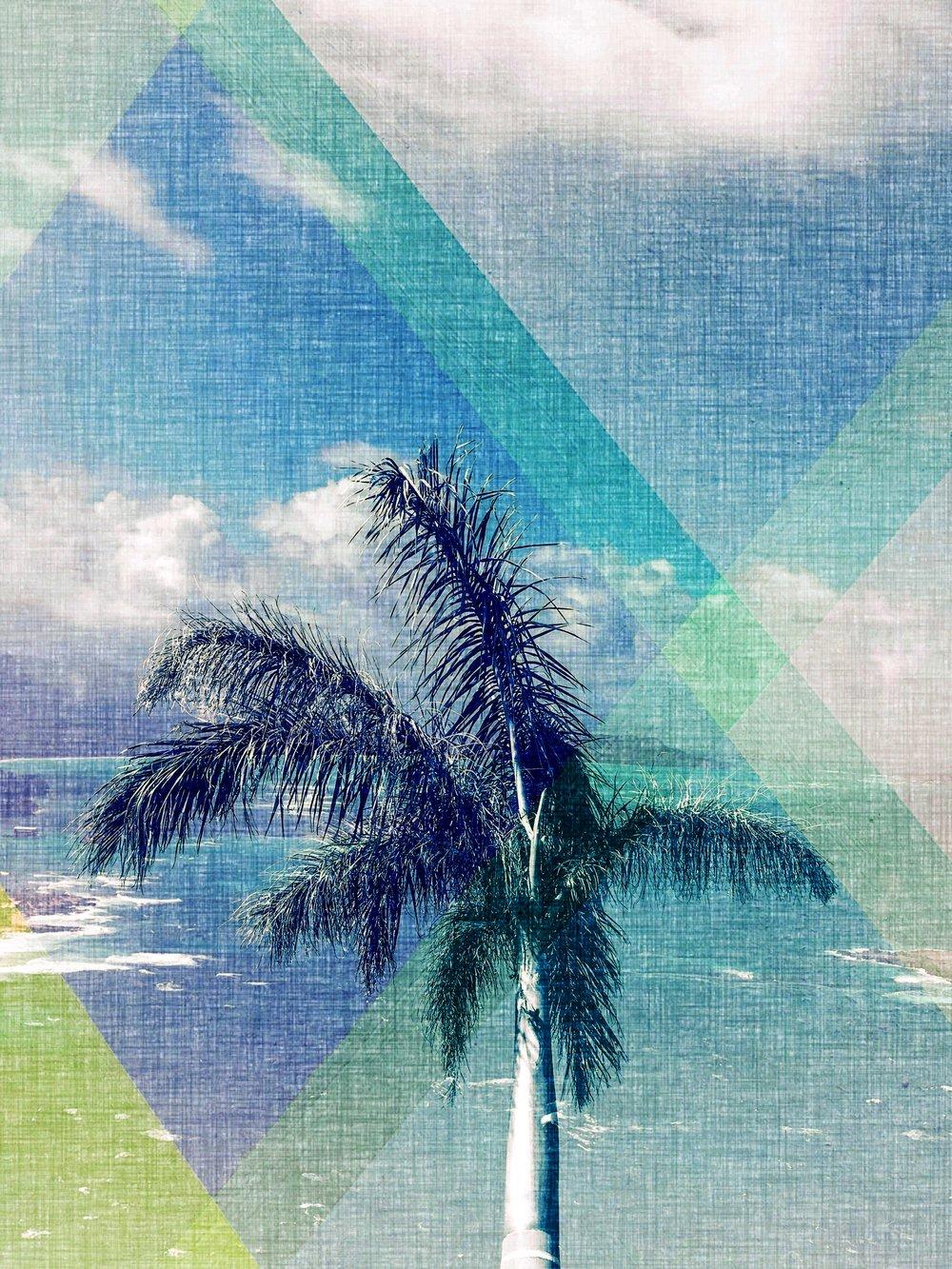 palms_40570487300_72e329b49a_o.jpg