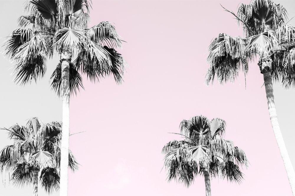 palms_42350747802_5f7ffaa093_o.jpg