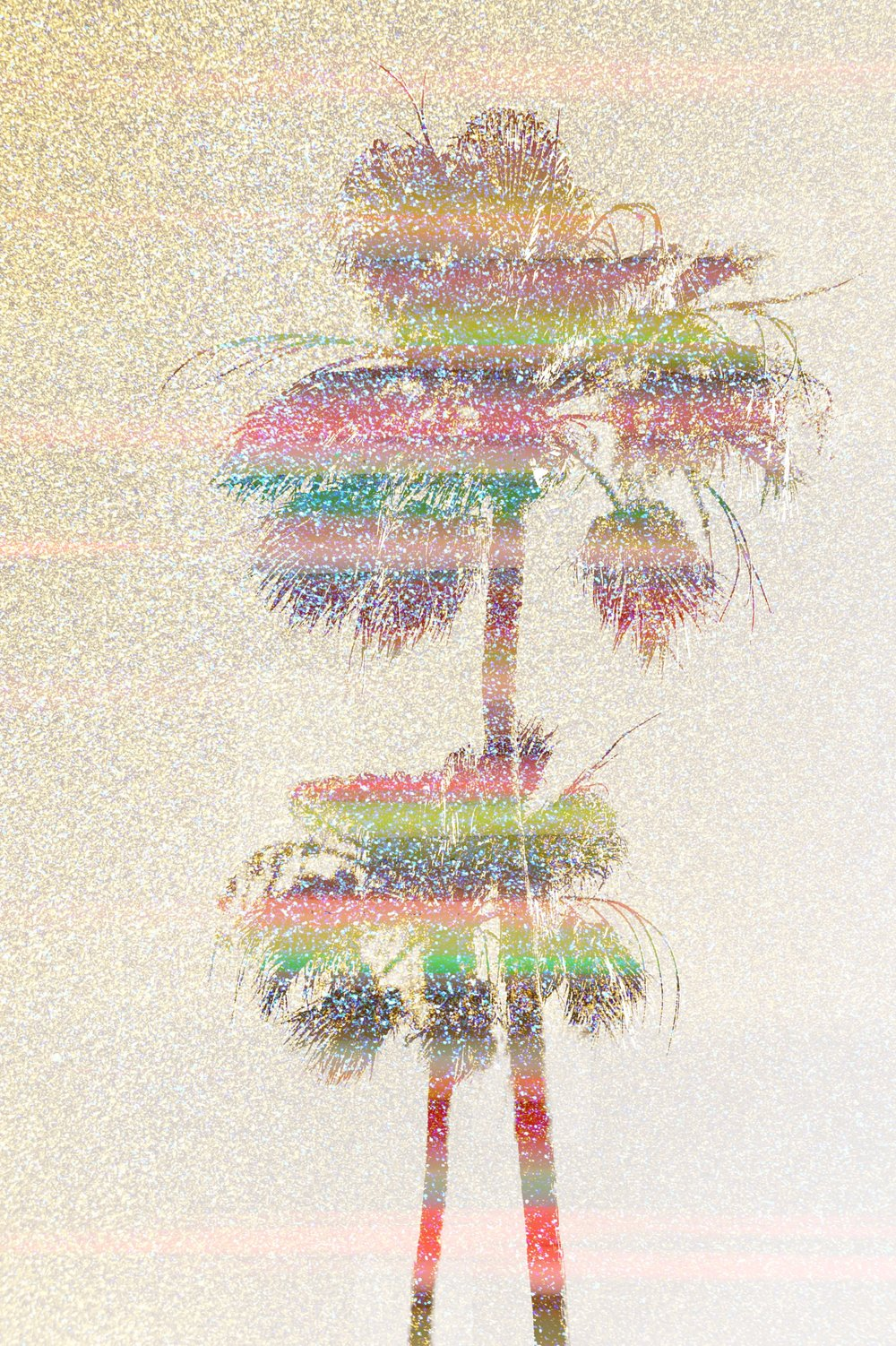 palms_27503740427_778440eb0f_o.jpg