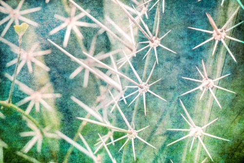 Cactus spines greens + blues