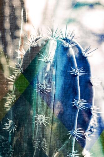 Cactus + Geometric