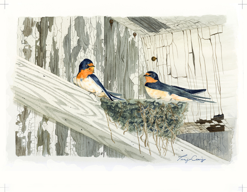Tony Craig, Barn Swallows
