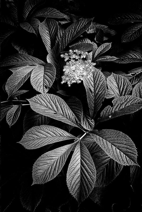 Scott McRae,  Inner Light