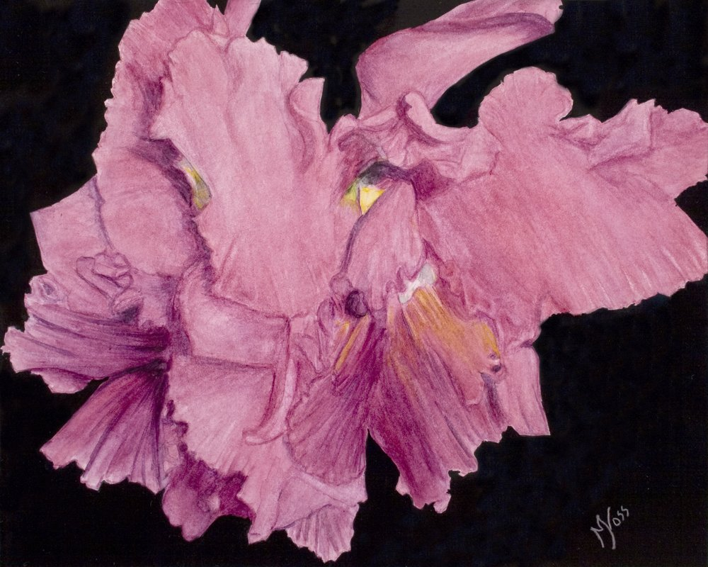 Mary Johnson Voss, Orchidstration, watercolor