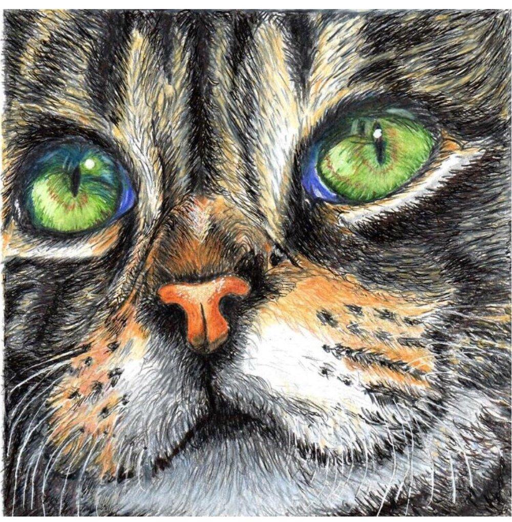 "Glenn Davis, Prismacolor Study , 6""x 6"""