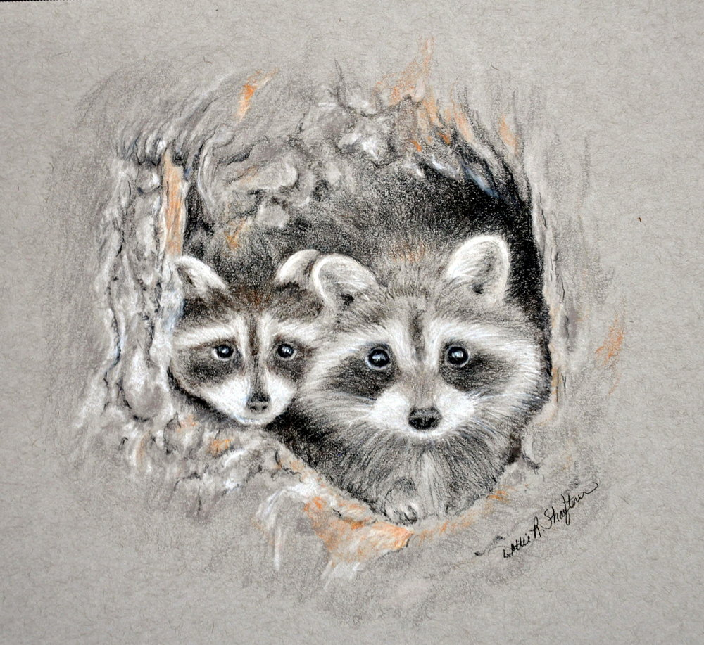 Dottie Shaftner - Image: Backyard BanditsDottie has worked as a graphic designer, freelance artist, set designer, and art instructor. Her passion is using colored pencil, watercolor, and pastel to portray the beautiful creatures in her back yard as the imps they truly are.