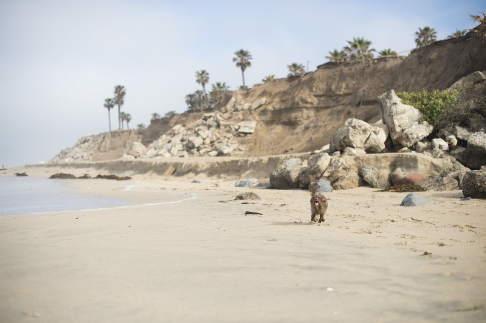 Dog beach is what we have been looking foward  to the most to see our dog Ninnie run on the long beaches of California
