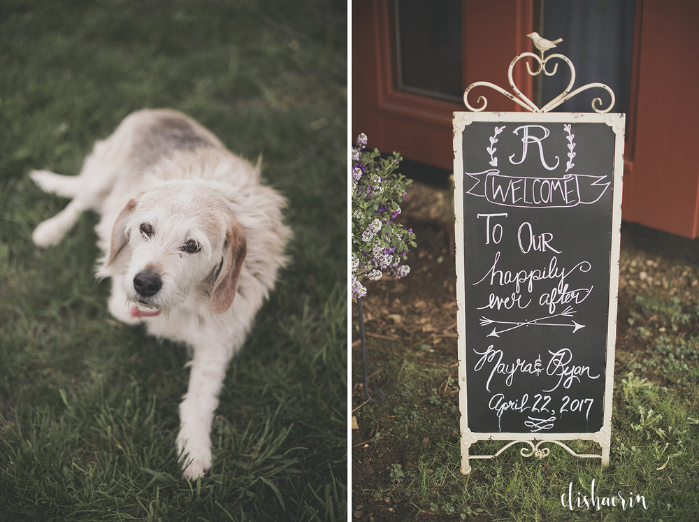 dog-at-wedding