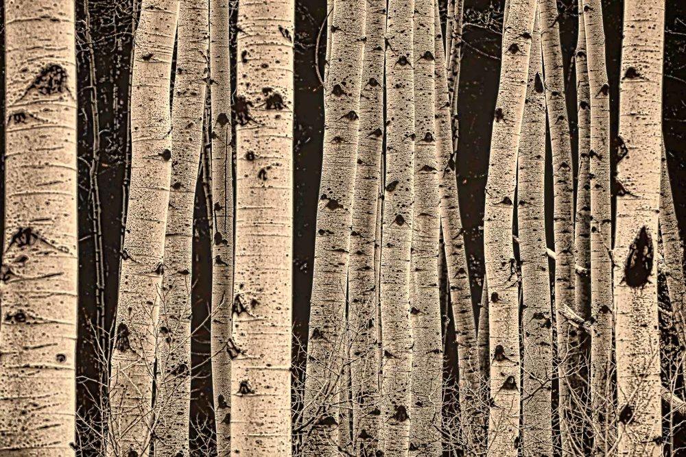 alpine_trees
