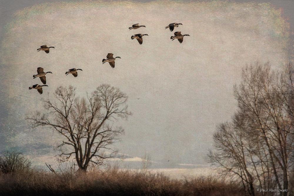 flight of the cranes