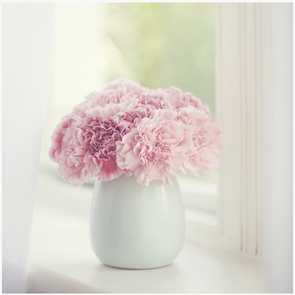 carnations 4