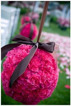 carnations 6