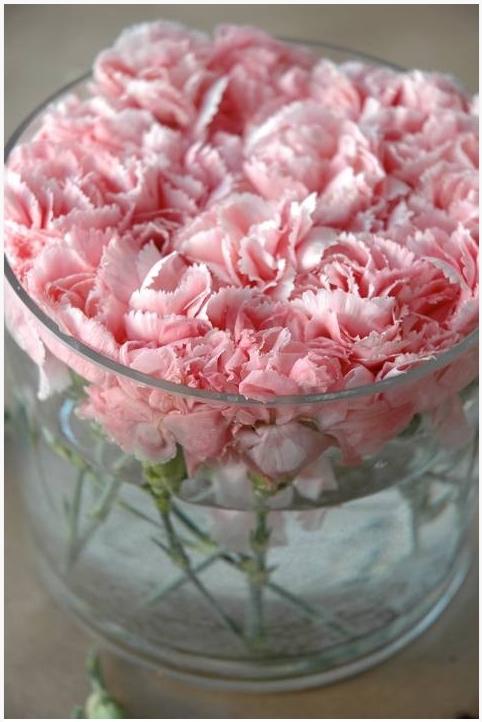 carnations 7