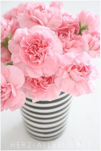 carnations 8