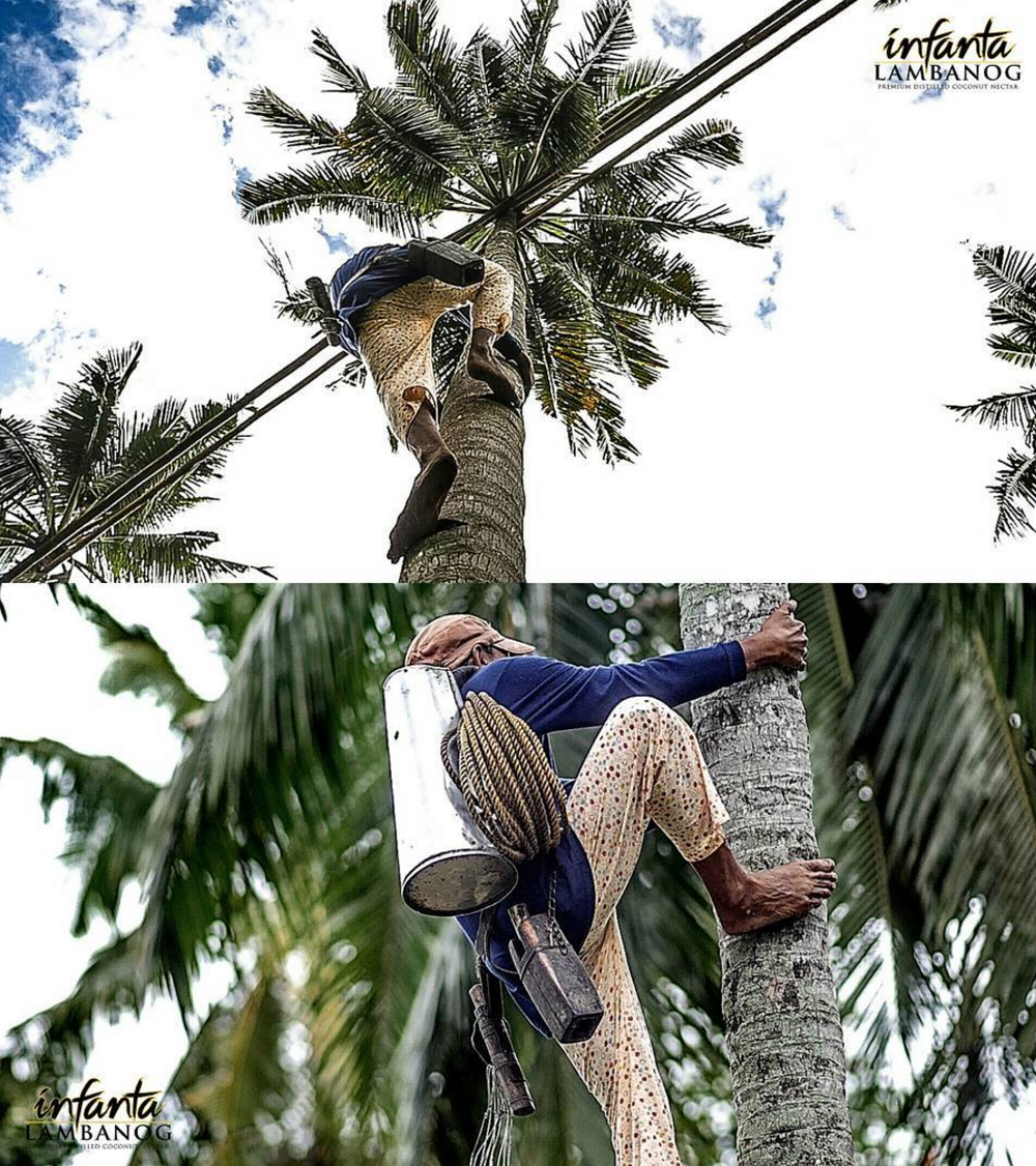 - With years of experience, he makes freeclimbing the coconut tree while carrying his gear look easy.